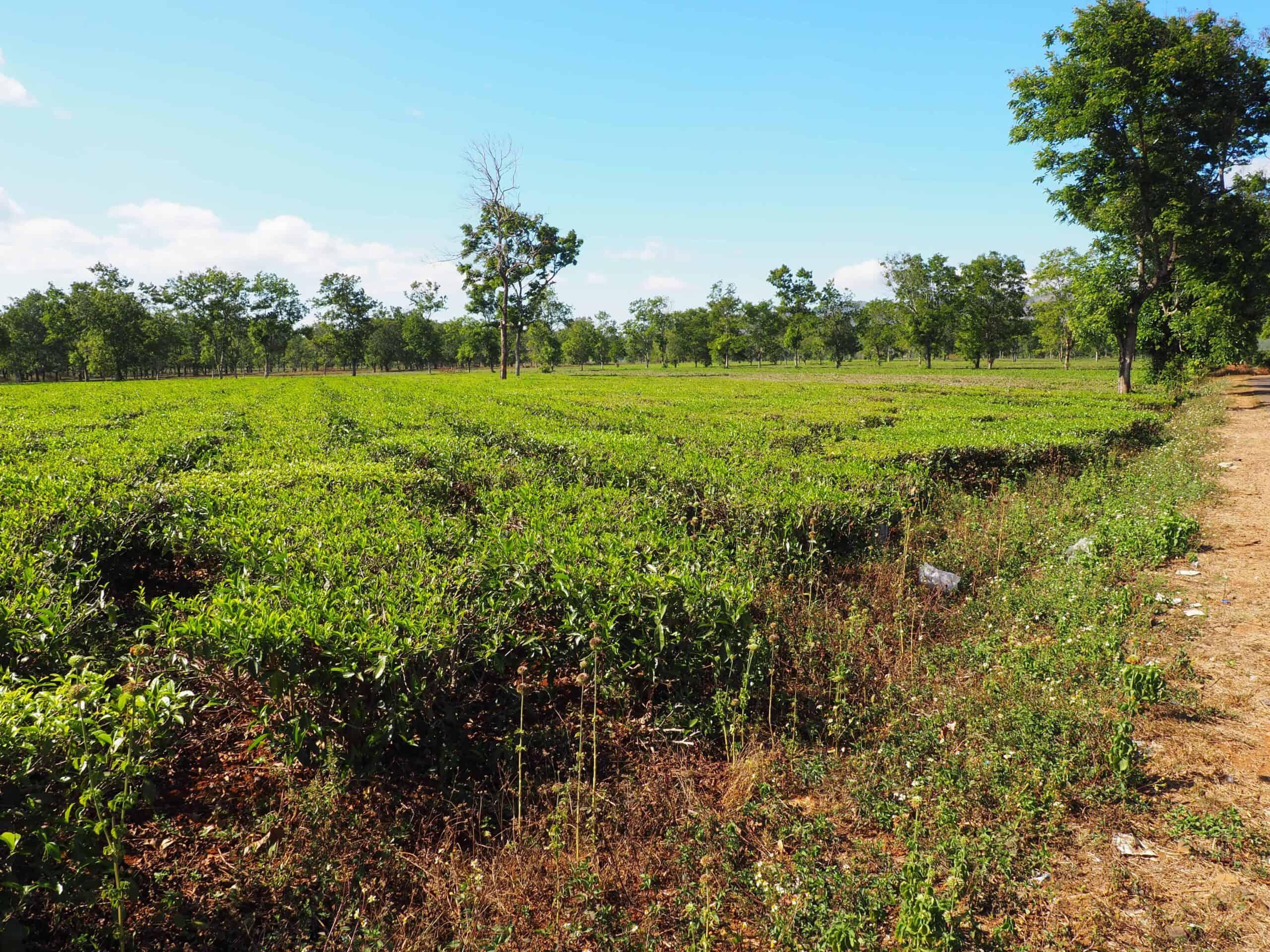 Đỉnh Chư Nâm - Pleiku - kuva 17.